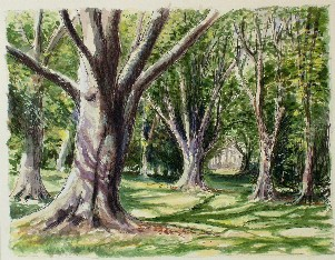 Painting of Beech Trees, Sussex